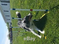 Dog Agility Équipement Starter Set Pour Les Débutants
